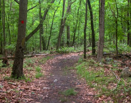 Along the Red Trail in Mount Hope Historical Park. Photo by Daniel Chazin.
