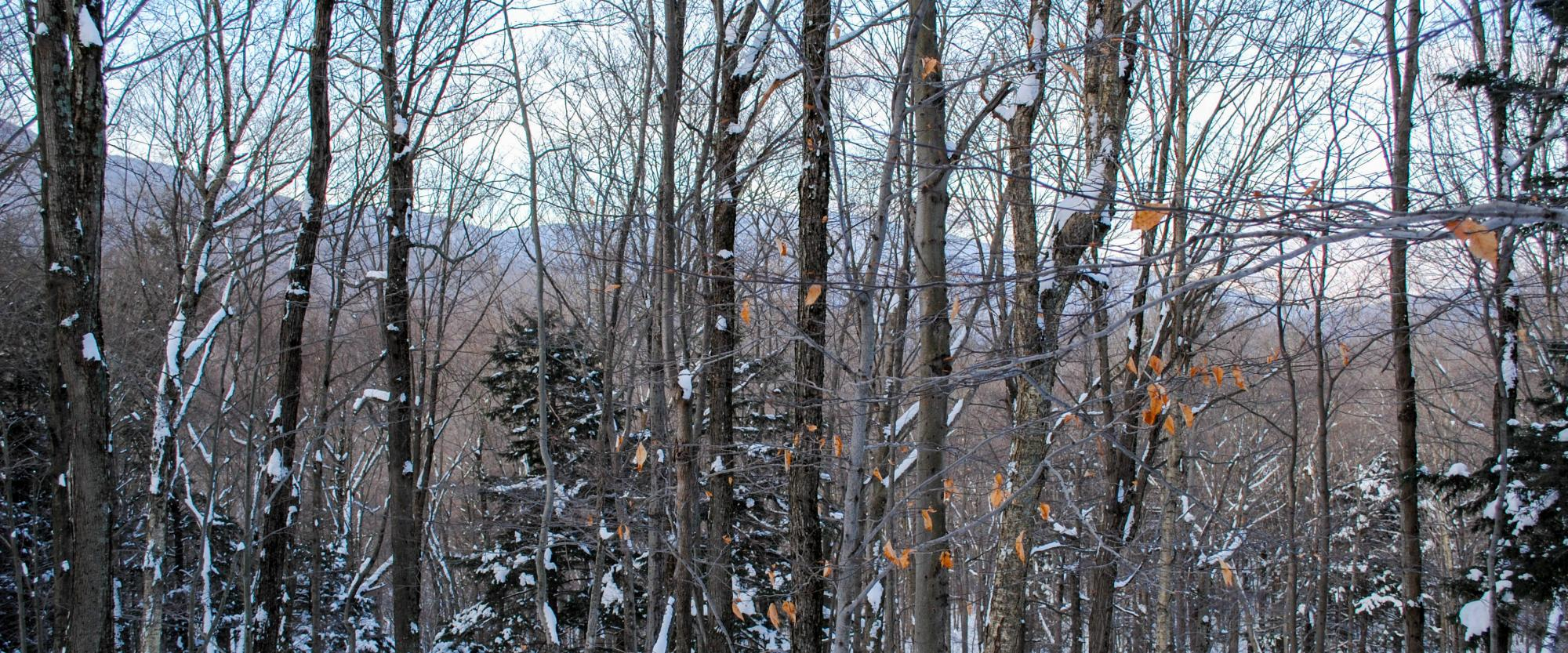 Winter view from the trail to Giant Ledge in the Catskills. Photo by Heather Darley.